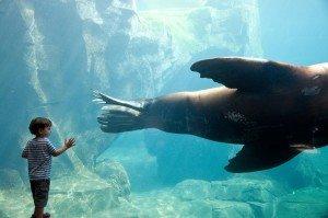 Boy and Seal TripShooter Vacation Photo Alaska USA