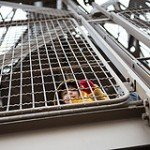 Photo of small boy climbing Eiffel Tower by Paris photographer Jade Maitre