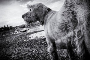 Dog vacation photo, by TripShooter Budapest photographer Melinda Guerini Temesi