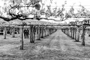 Couple walking through vinyard, by TripShooter's photographer in Santiago de Compostela, Bertolino Matteo